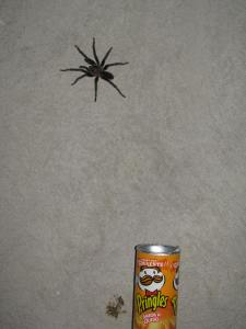 Look how big this spider is